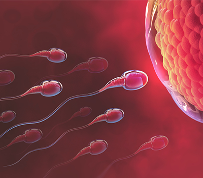 How to increase sperm counts? Food to improve sperm count